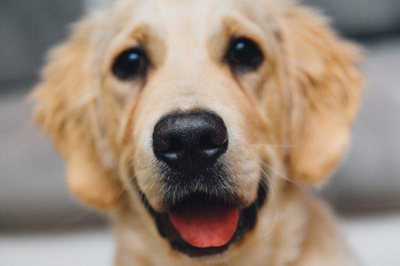 Imagen 7 Las nariz húmeda y fría de los perros es capaz de detectar el calor a distancia. Fuente: PxHere
