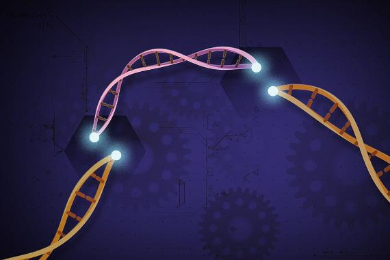 BBVA-OpenMind-Materia-Top ciencia 2020_9-Este año se han dado nuevos pasos hacia el uso clínico de CRISPR. Crédito: NIH Image Gallery