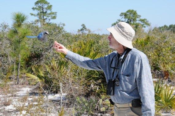 BBVA-OpenMind-bomba P-catástrofe de la superpoblación- 2-Paul Ralph Ehrlich era un desconocido entomólogo especializado en mariposas de la Universidad de Stanford. Crédito: Paul R. Ehrlich