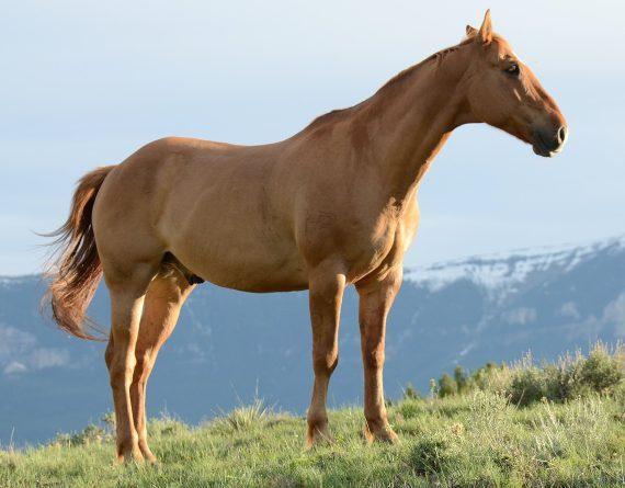 BBVA-OpenMind-Keith Darlington-Horses-david-dibert