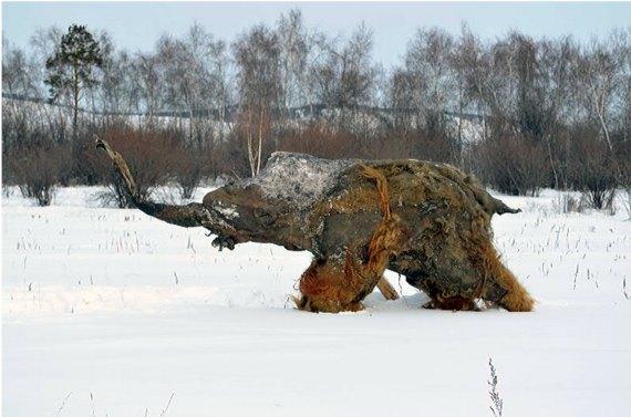 "BBVA-OpenMind-Materia-The Scientific Boom of Ice-Age Permafrost Mummis-Momias articas- 1-""Yuka"", the Woolly mammoth, in the environs of Yakutsk, Russia. Credit: Valery Plotnikov-El mamut lanudo ""Yuka"", en los alrededores de Yakutsk (Rusia). Crédito:"
