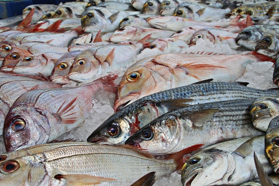 BBVA-OpenMind-Miguel Barral-sostenibilidad comer Pescado saludable-3-En los últimos años se ha detectado un peligroso incremento de su presencia y concentración en las especies marinas de consumo habitual. Fuente: PxHere