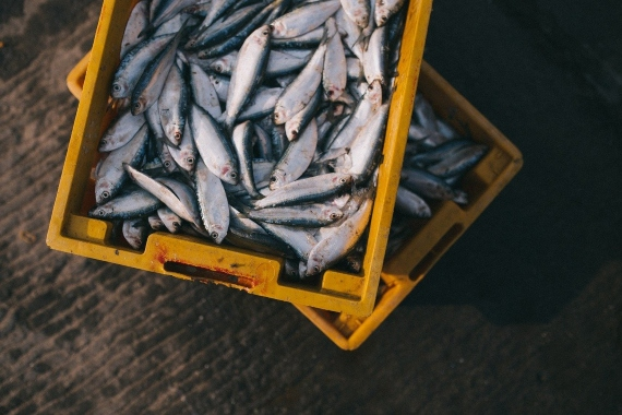 BBVA-OpenMind-Miguel Barral-sostenibilidad comer Pescado saludable-5-La respuesta está en las medidas adoptadas para evitar la sobrexplotación pesquera de especies pequeñas. Fuente: Pixabay