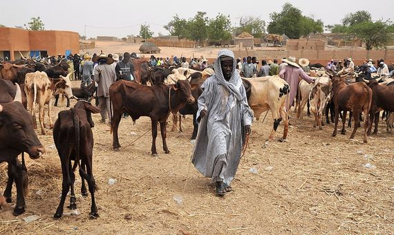 Otros estudios también apuntan a la aportación del ganado en el mantenimiento de los ecosistemas y en el sustento alimenticio de países en desarrollo. Imagen: <strong>Wikimedia</strong>